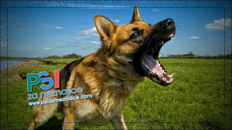 Zašto psi laju?