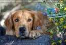 Pisma čitatelja – Prošle godine je urađena kastracija psa