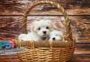 Pisma čitatelja – Što da radimo s neodgovornim vlasnicima našeg šteneta?