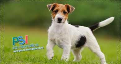 Pisma čitatelja – Prvo da vam se zahvalim što ste me spasili kupnje psa od švercera