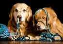 Pisma čitatelja – Što uraditi u slučaju sukoba među psima?